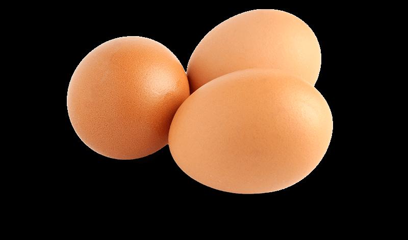 immagine uova